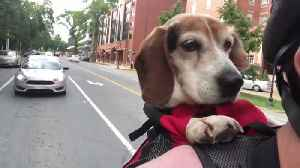 Dog cruises around town in goggles [Video]