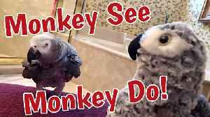 Parrot plays game of 'monkey see, monkey do' [Video]