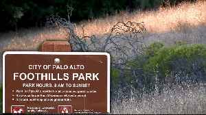 Palo Alto Implements Plan to Mitigate Risk of Foothills Wildfire [Video]