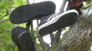 'Shoe Trees' in Orleans County are a shrine to forgotten footwear [Video]