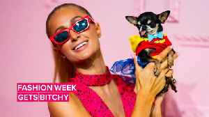 Of course Paris Hilton dressed her dog as Wonder Woman for NYFW [Video]