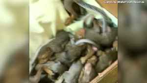 Over a Hundred Squirrels Treated on Carolina Coast After Being Rescued from Hurricane Dorian [Video]