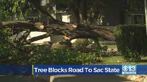 Tree Over Road Near Sac State [Video]