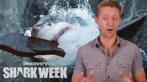 'The Daily Bite': Great White Discovery [Video]