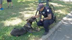 NYPD Officer's K9 Named After Uncle Who Died from 9/11-related Illness [Video]