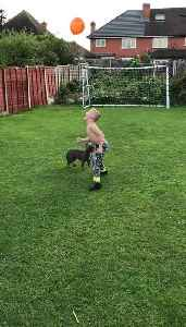 Dog And Shirtless Kid Play With Balloon in Garden [Video]