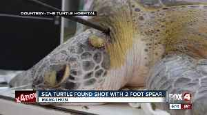 Tips sought to find person responsible for speared sea turtle in the Florida Keys [Video]
