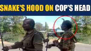 Tamil Nadu cop rescues snake from roadside tree, video goes viral |OneIndia News [Video]