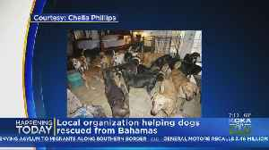 PAART Rescues More Dogs From Bahamas [Video]