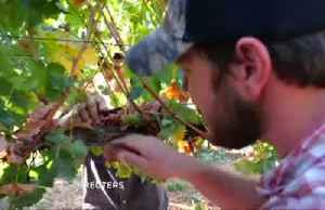 Evangelicals harvest land in settlements Israel hopes to annex [Video]