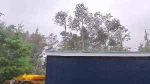 Hurricane Dorian Downs Tall Trees [Video]