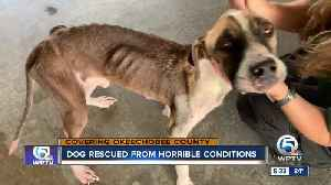 News video: Dog rescued from horrible conditions in Okeechobee County