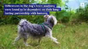 Different Dog Breeds Have Different Brains, Study Finds [Video]