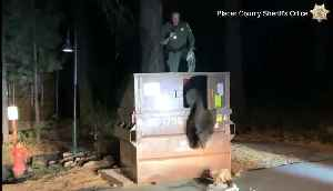 Police officer rescues bear trapped in dumpster [Video]