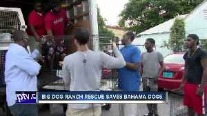 Canine rescue missions begin in Marsh Harbour [Video]
