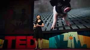 How to create a world where no one dies waiting for a transplant | Luhan Yang [Video]