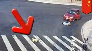 Puppy takes crosswalk after seeing jaywalker hit by car [Video]