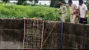 Drowning leopard climbs out of irrigation well using ladder made from cot in central India [Video]