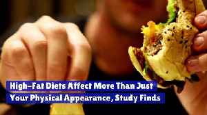 High-Fat Diets Affect More Than Just Your Physical Appearance, Study Finds [Video]