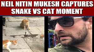 Neil Nitin Mukesh posts video showing four cats fight a snake, video viral | Oneindia News [Video]
