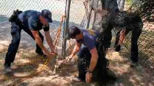 Firefighters Rescue Deer Trapped In Batting Cage Net [Video]