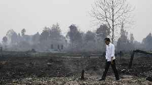 Indonesia's president inspects burnt forests and consequences of the smoke [Video]