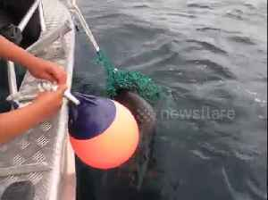 Heartwarming moment Canadian fisherman rescued sea lion pup trapped in fishing nets [Video]