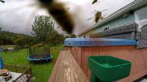 Yellow jacket wasps completely swarm & invade hot tub [Video]