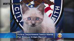 Police Department Seeks 'Purrrrfect Name' For 'Pawofficer' Kitten Recruit [Video]
