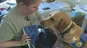 Canine Companions Organization Raising Awareness For Service Dog Fraud [Video]