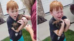 HEART-WARMING MOMENT BOY IS SURPRISED WITH TINY PUPPY AFTER SAVING ALL OF HIS CHANGE TO BUY ONE [Video]