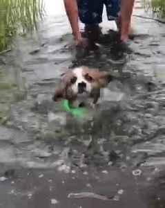 Puppy's first ever swim will totally melt your heart [Video]