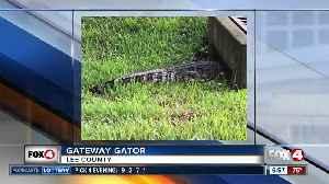 Deputies remove big alligator from near Gateway Boulevard [Video]