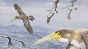 One Of The World's Oldest Bird Species Discovered In New Zealand [Video]