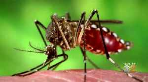 Mosquitoes Spreading Rare Disease Causing Fever, Chills, Brain Swelling [Video]