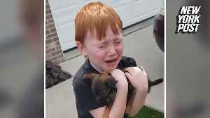 Boy meets his new furry friend in tearful surprise [Video]