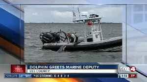 Dolphin greets marine unit deputy at boatside [Video]