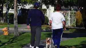 Study Found Overweight Owners More Likely To Have Overweight Dogs [Video]
