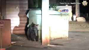 Bear cub rescued from dumpster by police [Video]