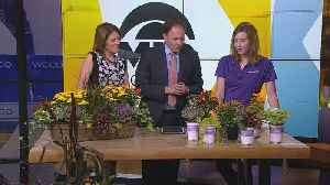 Planting Tips: Transitioning Your Yard For Fall Season [Video]