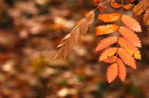 News video: What is the Autumnal Equinox?