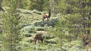Idaho Fish & Game proposes new out of state hunting management plan [Video]