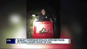 Shelby Township police officer finds python under hood of car [Video]