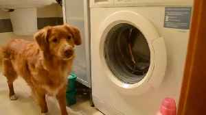 ODW: Laundry Room [Video]