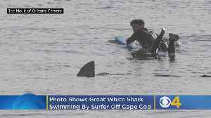 Photo Shows Great White Shark Swimming By Surfer Off Cape Cod [Video]