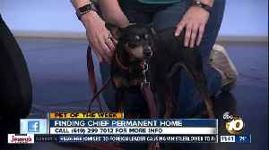Pet of the Week: Cheif [Video]