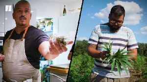 News video: Two Latinx Entrepreneurs on The Promise - And Fear - Of Working In Cannabis