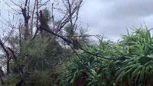 Cat clings to tree as Typhoon Tapah batters Japan [Video]