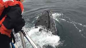 Up-close encounter with friendly humpback whale [Video]