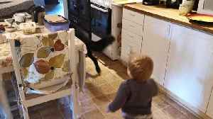 Toddler adorably plays tag with friendly German Shepherd [Video]